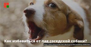 Как законным способом заткнуть соседскую собаку, которая лает ежедневно с 8 до 23 часов?