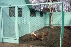 Какие существуют нормы отдаления от забора соседей будку с собакой, курятников и выгула кур и гусей?
