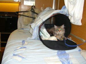 Почему необходимо оплачивать провоз кошки в электричке?